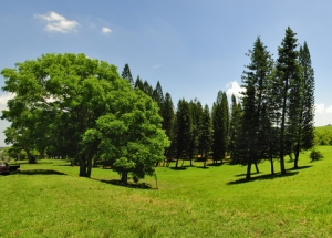 Green field with trees