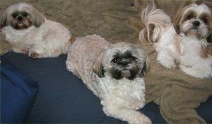 Tilly, Oreo, Ling Ling - picture (c) Sandra Bell Kirchman